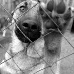 В России принят закон об «Об ответственном обращении с животными», но бродячих кошек и собак продолжают убивать в большинстве регионов