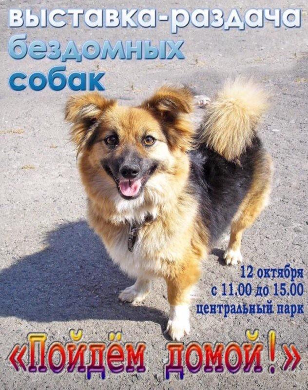 выставка раздача бездомных собак в Белгороде
