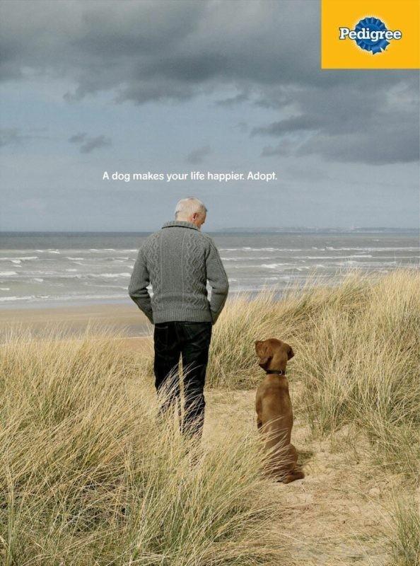 реклама про собаку
