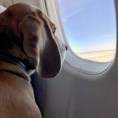 собака в салоне самолёта