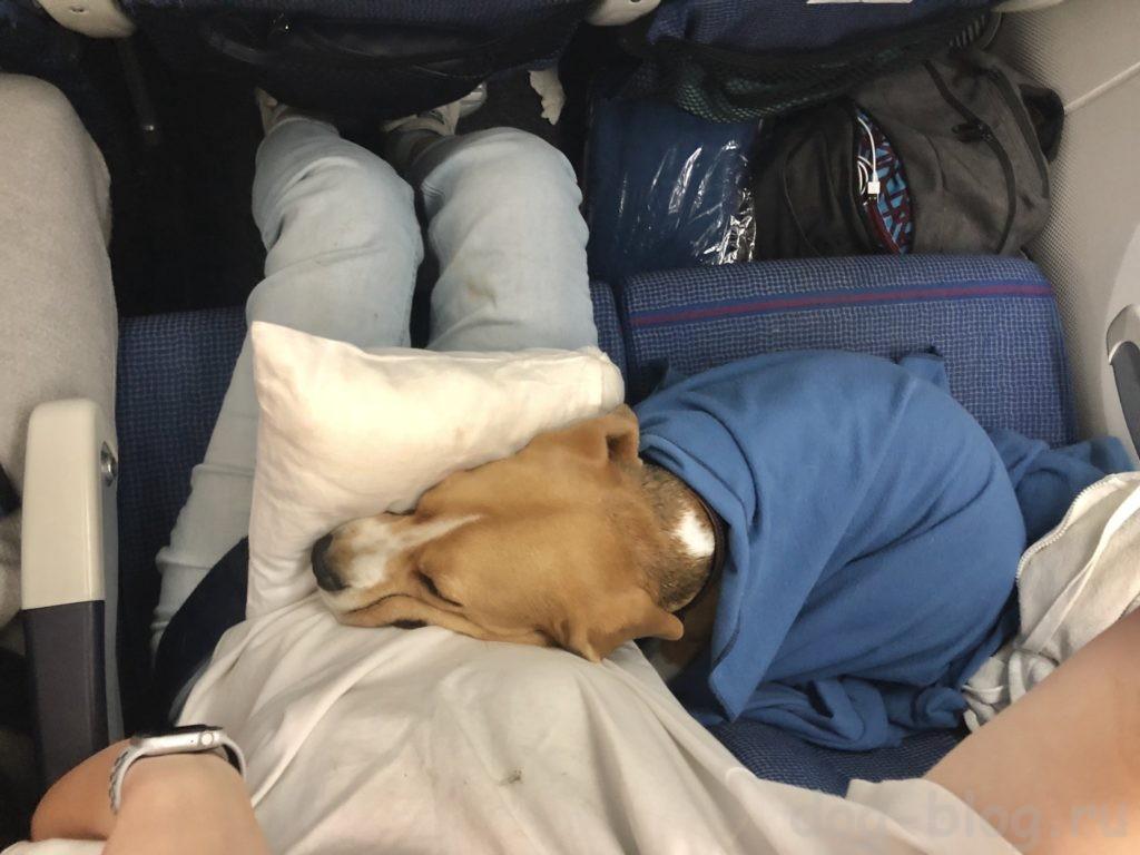 перевозка собак в самолёте