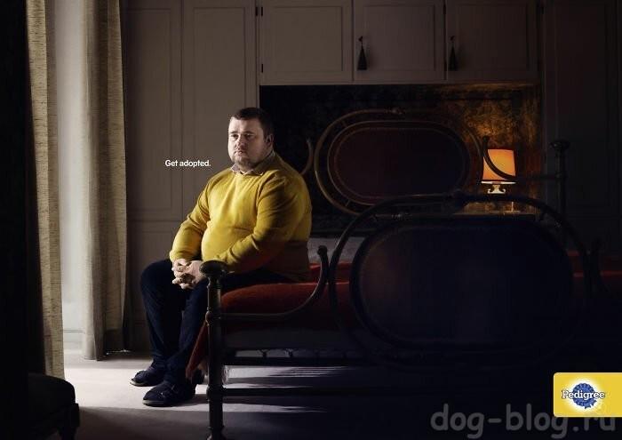 собака из рекламы