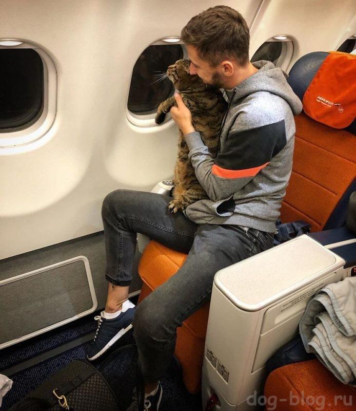 правила перевозки животных в самолёте