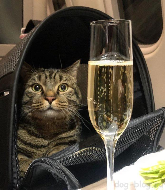 каких животных можно перевозить в самолёте