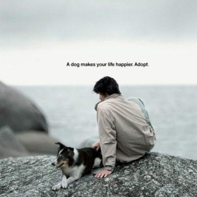 какая собака в рекламе