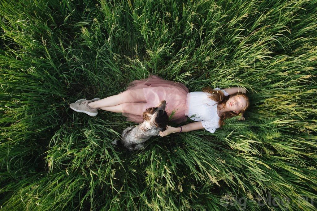 собака помощник человека в духовном развитии