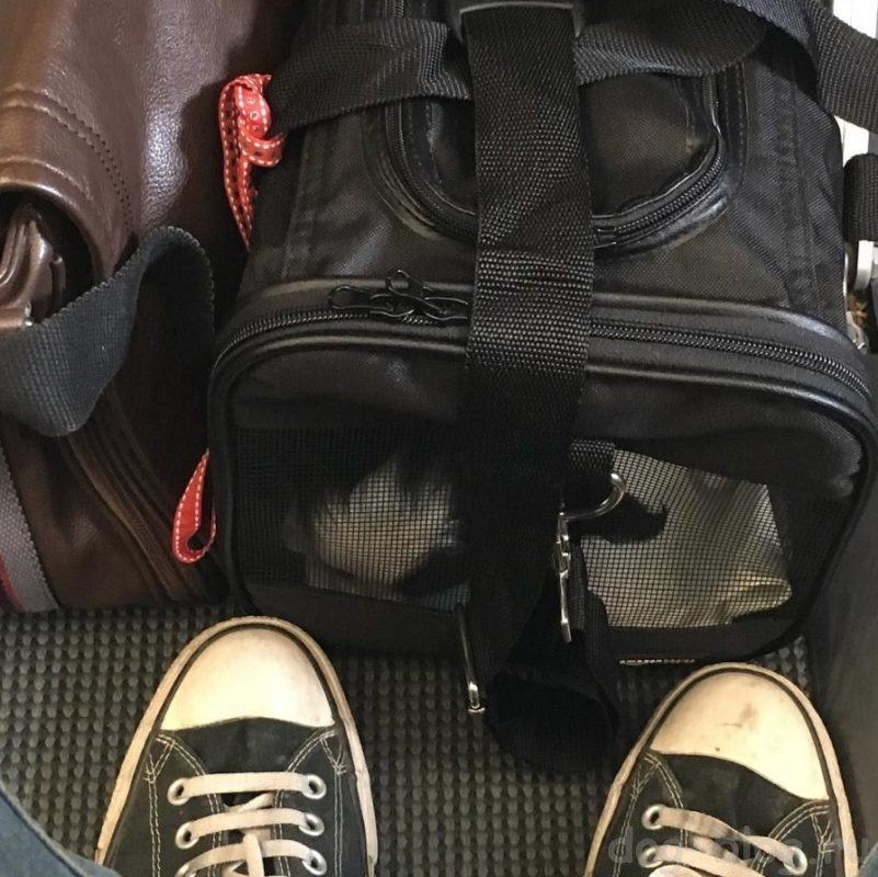 перевозка животных в самолёте