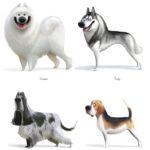 Атлас Пород Собак от Вари Колесниковой