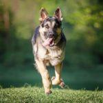Как фотографировать собак — 10 правил