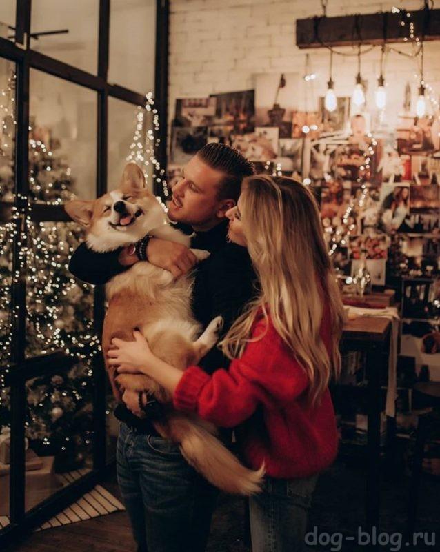 собака и новый год