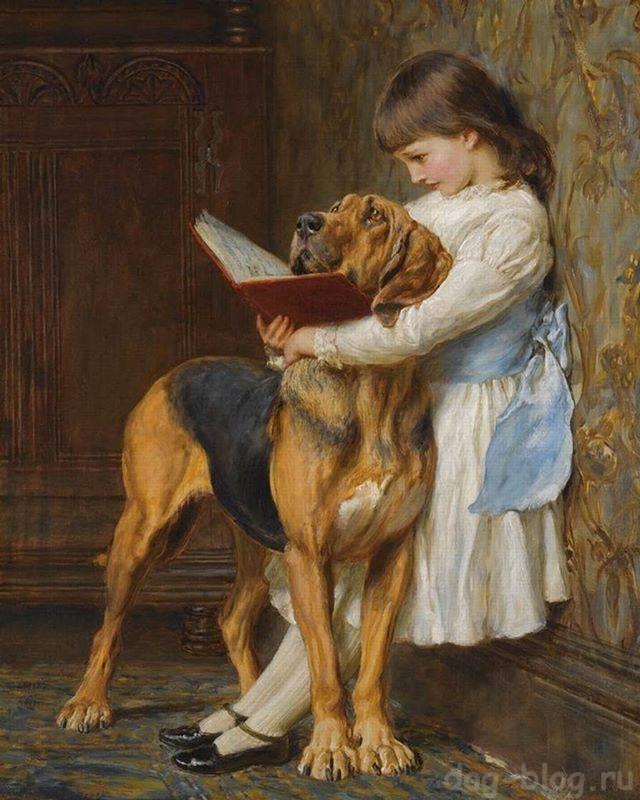 руководство по дрессировке и обучению собак