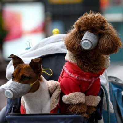 коронавирус и собаки