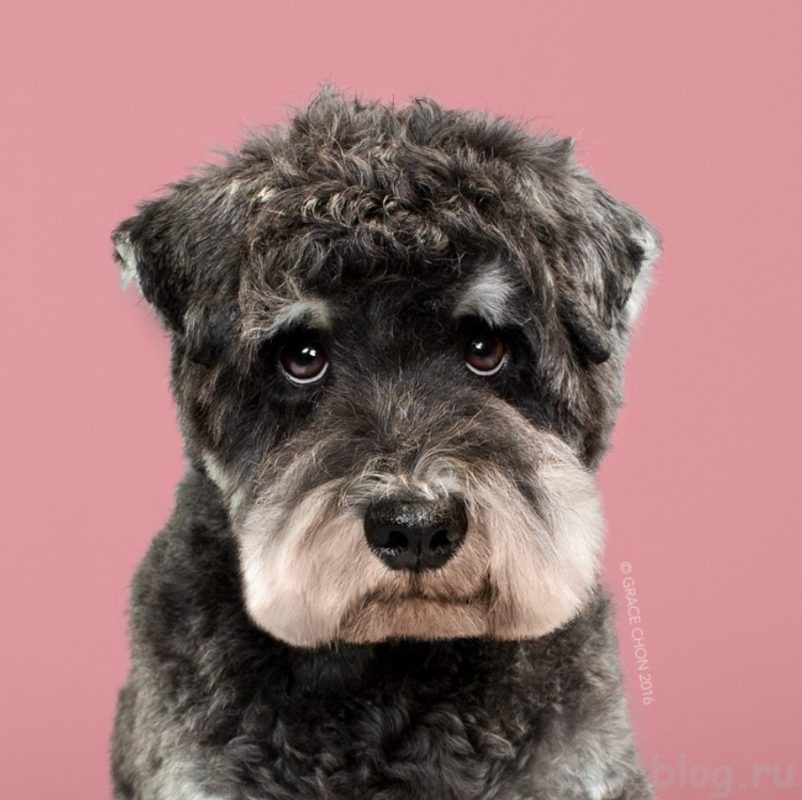 грумер для собак
