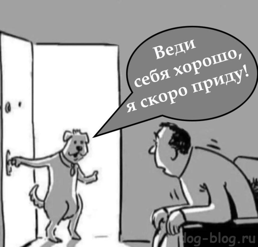 выгул собак в карантин