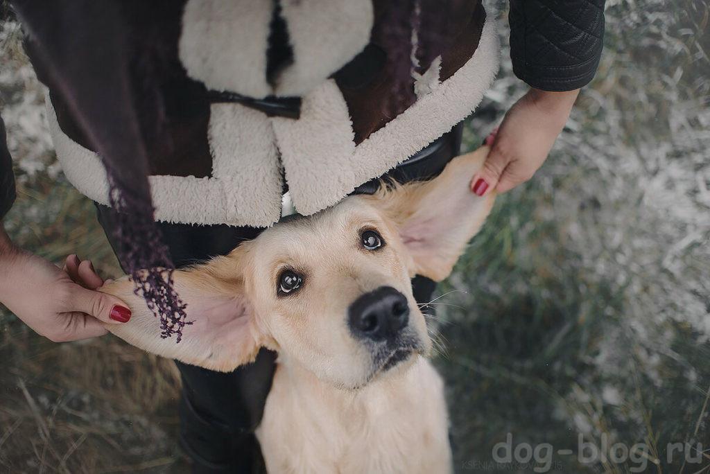 память у собак