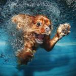 Собака тонет — первая помощь