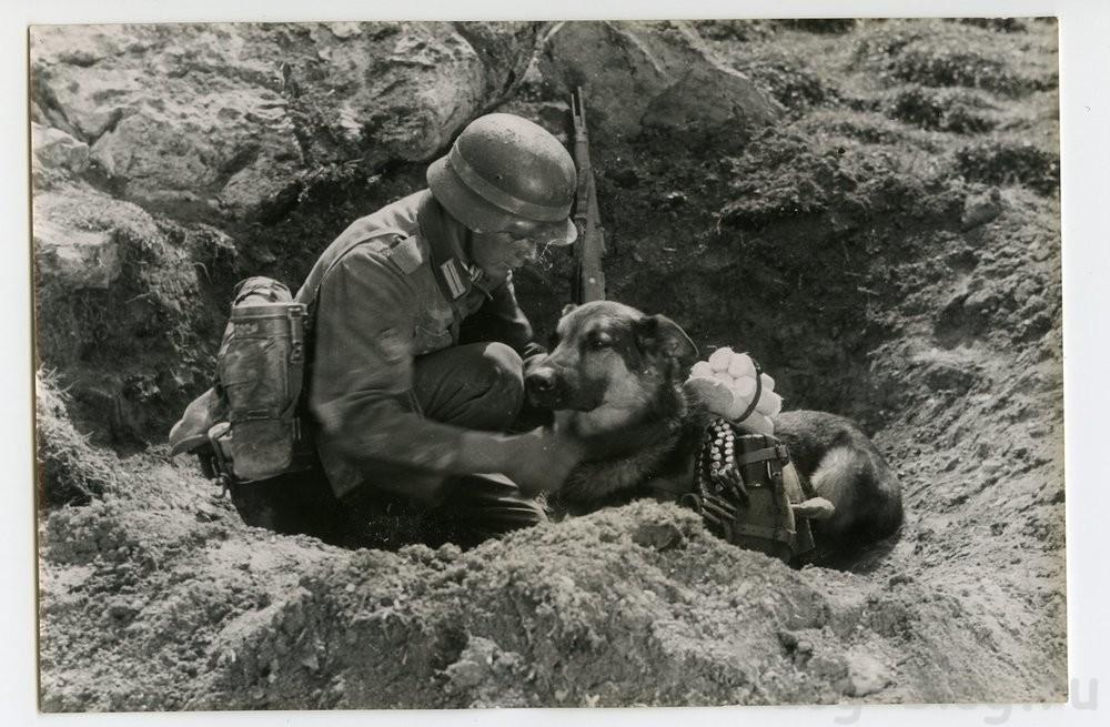 собаки Вермахта