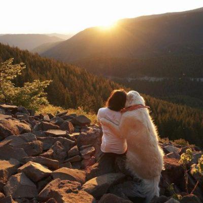 привязанность к собаке