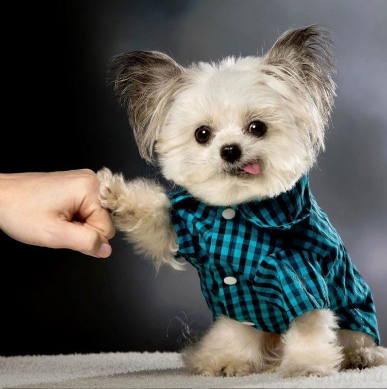 собака счастье