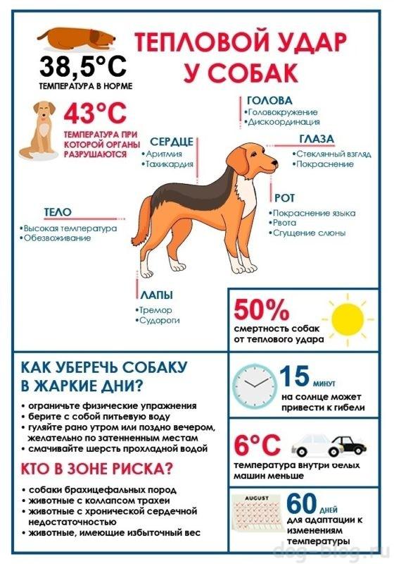 тепловой удар у собаки лечение