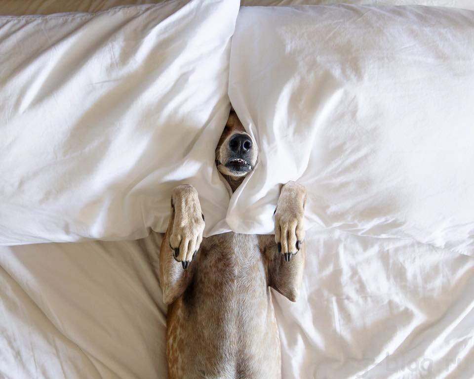 я не сплю с собаками