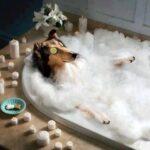 Как искупать Очень Хорошую Собаку