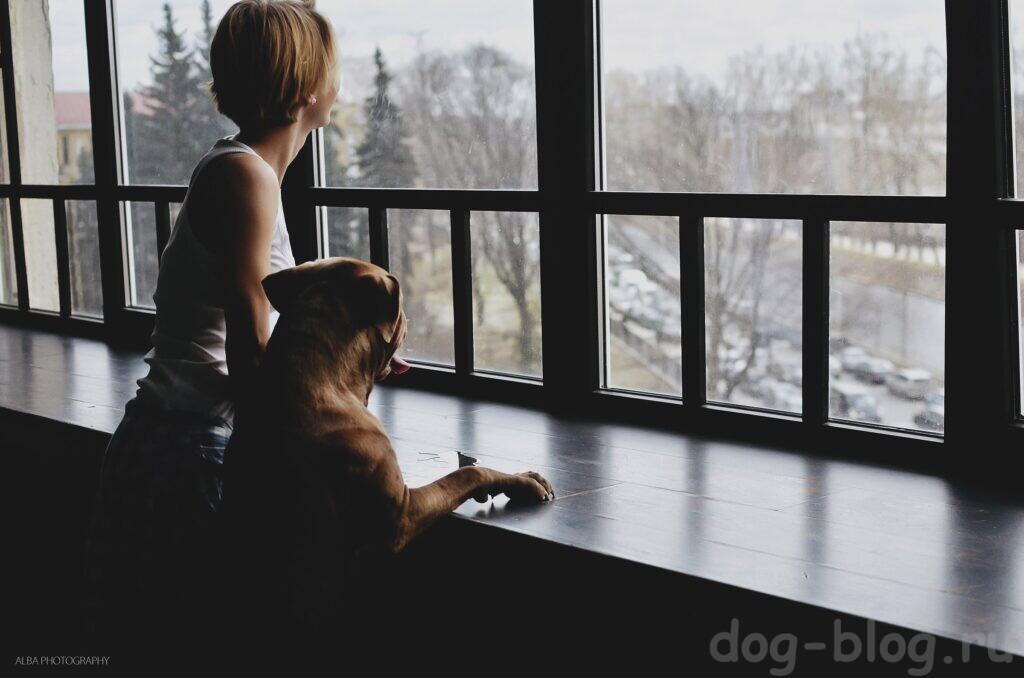 собака лай за окном