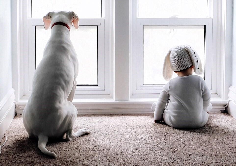 собака лает на окно