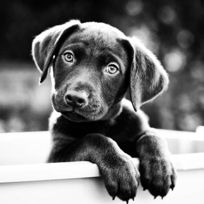 потребности собаки