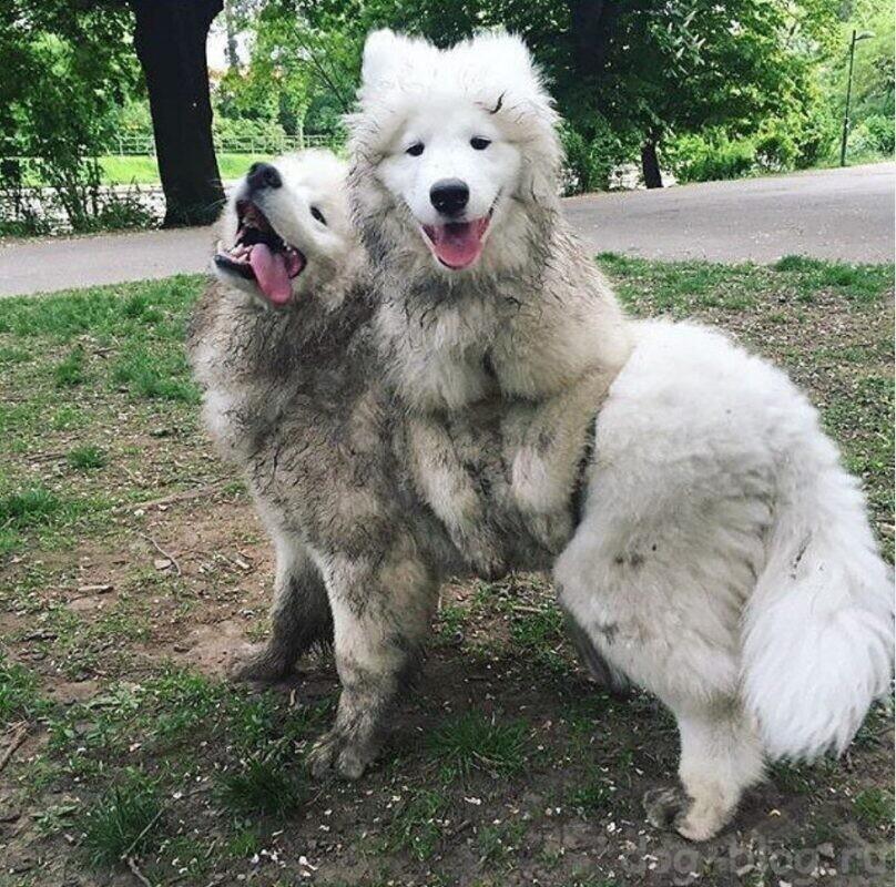 Как искупать собаку
