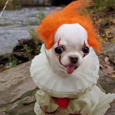 балованная собака
