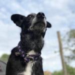 О любви к старой агрессивной собаке