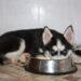Особенности пищеварения у собак, о которых нельзя забывать